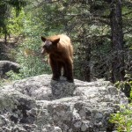 Black Bear Rockwood Box Upper Animas River